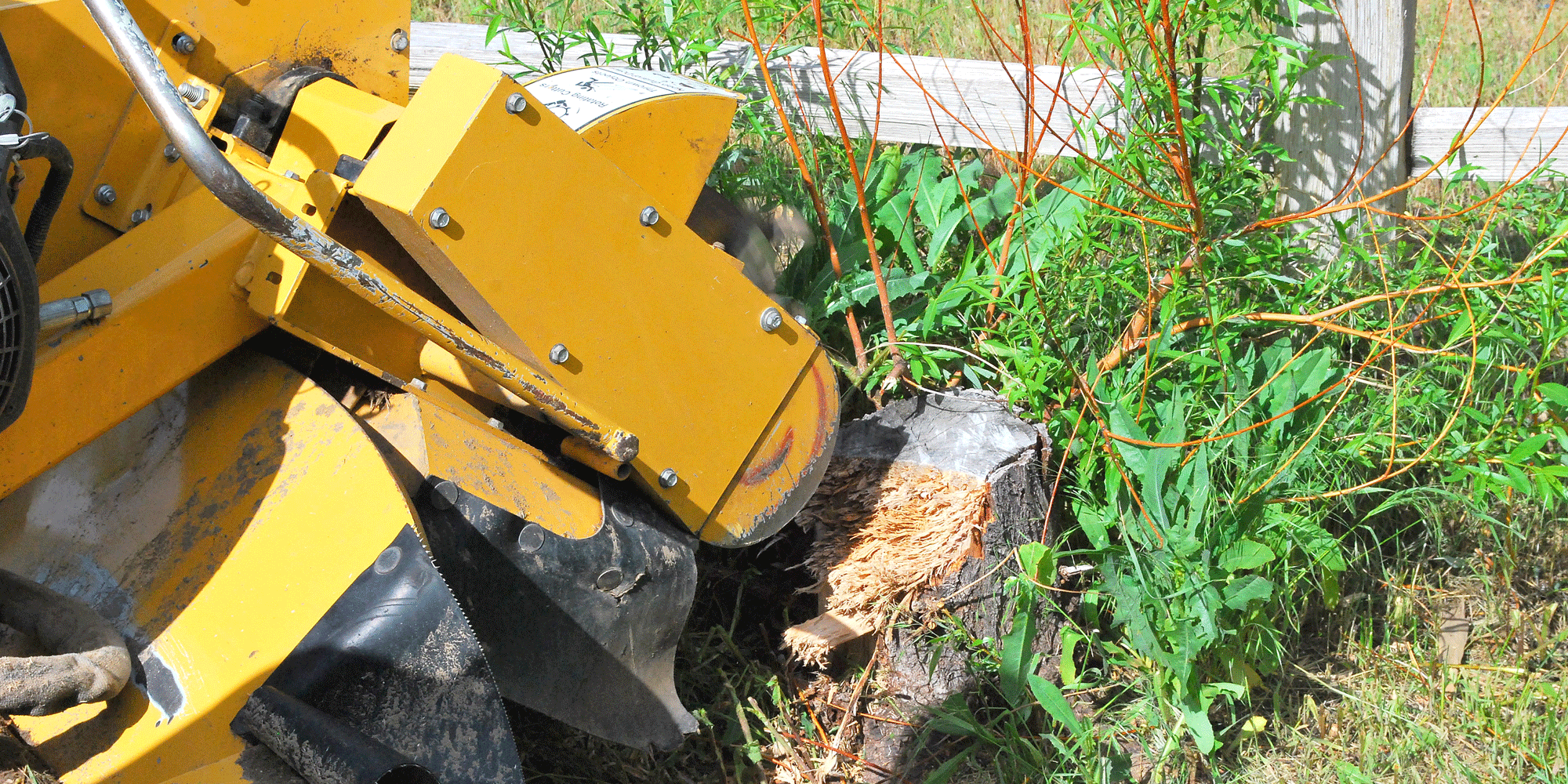 Whether to Remove Stumps Personally or Hire a Tree Service Professional
