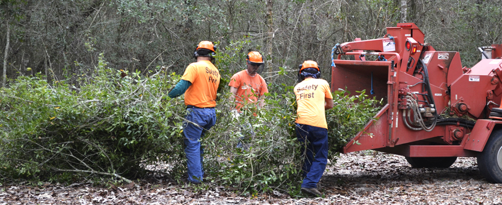 Tips And Points for Hiring Land Clearing Professionals