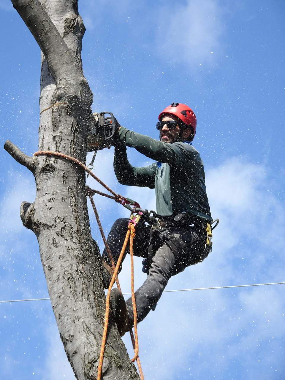 tree-trimming